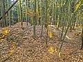 Turmhügel mit Graben bei Rosall (Tirschenreuth).jpg