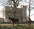Two fine steeds by the castle - geograph.org.uk - 1104780.jpg