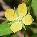 UMFS flower 5.jpg