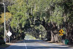 U.S. Route 17 in Georgia - A canopy of oak trees over a section of US 17 in McIntosh County