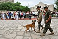 US Navy 100422-N-3750S-618 Sailors assigned to Naval Technical Training Center in San Antonio demonstrate dog-handling procedures during Navy Day at the Alamo as part of San Antonio Navy Week.jpg