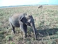 Udawalawe National Park - උඩවලව ජාතික උද්යානය 2012 - panoramio (5).jpg