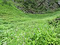Valley of Flowers National Park - during LGFC - VOF 2019 (13).jpg