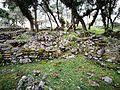Vegetació a les ruïnes de Kuelap.jpg