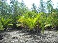 Vegetasi rawa-rawa Bangka.jpg