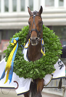 Victory Tilly Swedish racehorse