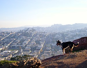 Corona Heights Park - Image: View from Corona Heights 1