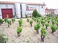 Villabuena - Bodegas Araico 2.jpg
