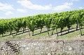 Vineyard by the Mosel jun 2018 (2).jpg