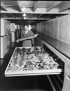 Viola Shelly Schantz American zoologist