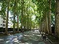 Vitoria laan in de bomen I.JPG