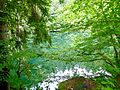 WLE 17 Faulenbacher Tal - Waldsee.jpg