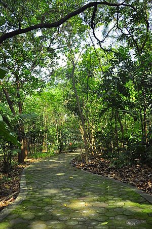 Arroceros Forest Park - A trail inside the forest park