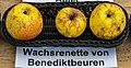 Wachsrenette von Benediktbeuren jm55107.jpg