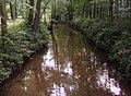 Wald Iggelheim 03.JPG