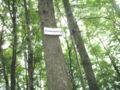 Waldabteilung Armesberg.JPG