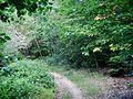 Wanderweg - panoramio (126).jpg