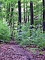 Wanderweg im Naturpark Schönbuch bei Breitenholz - panoramio - qwesy qwesy.jpg