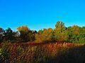 Warner Park - panoramio (67).jpg