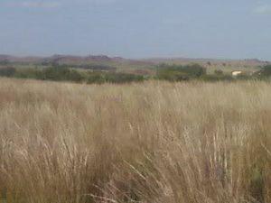 Battle of Washita River - Location of Black Kettle's campsite by the Washita River in 2008