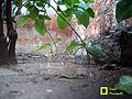 Water fall dirt.jpg