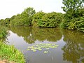 Water lilies, Pevensey Haven - geograph.org.uk - 210025.jpg