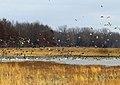 Waterfowl at Port Louisa National Wildlife Refuge (15783288242).jpg