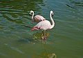 Westfalenpark-100821-17783-Flamingos.jpg