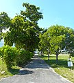 Westview Cemetery - Pompano Beach (6).jpg