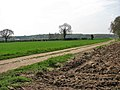 Where Ridland's Road becomes a track - geograph.org.uk - 787337.jpg