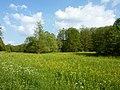 Wiese bei Sindelfingen - geo.hlipp.de - 10627.jpg