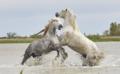 Wild life (horses).png