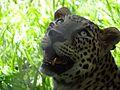 Wild life at zoo 29.jpg