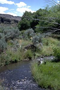 A stream lined with grasses, sagebrush, large bushes, and small trees