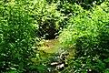 Wilsonville Memorial Park Boeckman Creek 2.JPG