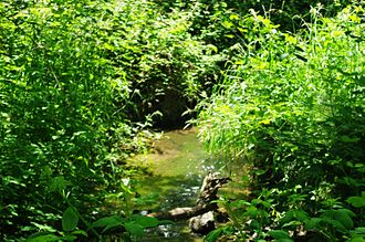 Wilsonville, Oregon - Boeckman Creek in Memorial Park