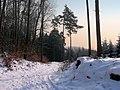 Winter im Teutoburger Wald04.jpg