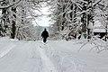 Winterwald - panoramio.jpg