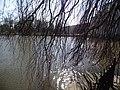 Wiosna wystartowała ,-)) 6 - panoramio.jpg