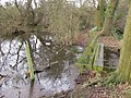 Woodland Pond - geograph.org.uk - 312616.jpg