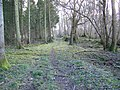 Woodland path, Pits Wood - geograph.org.uk - 1704177.jpg