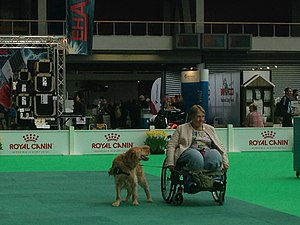 World Dog Show, Amsterdam, 2018 - 16.JPG