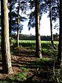 Wrautum - geograph.org.uk - 284621.jpg
