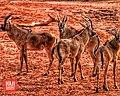 Yankari Wild Animal.jpg