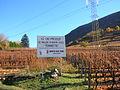 Zona di produzione del Vallée d'Aoste Torrette.JPG
