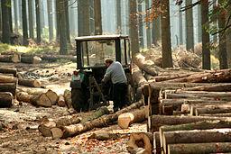 Zrywka drewna 776