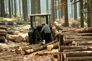 Ťažba dreva
