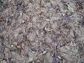 Zuckerrüben nach der Ernte013.jpg