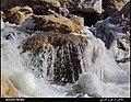 (((زمستان سرد رودخانه خروشان مردی چای))) - panoramio.jpg