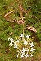 ? succulent Alvor Portugal 24.02.16 (24872158019).jpg